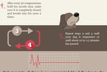 Dog Health & Medical info.