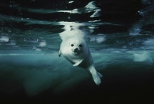 water & underwater