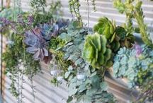 We Heart Succulents