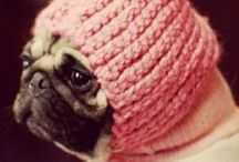 Pugs♥ / The Pug is a breed of dog with a wrinkly, short-muzzled face and curled tail. The breed has a fine, glossy coat that comes in a variety of colours, most often fawn or black, and a compact square body with well-developed muscles.