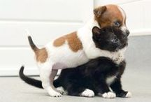 Cats and Dogs / Dogs and Cats and other furry things. / by Popnplus