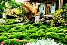 Garden / by Christy Welsh