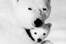 ♥ ZVÍŘATA ♥ ANIMALS