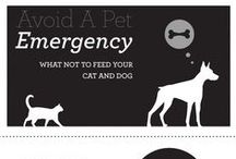 Subject: Animal Care / Interesting articles, images, videos related to Animal Care
