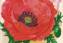 World War One - Poppies for Remembrance / The Poppy symbol of World War One