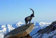 Parco Gran Paradiso, Valle d'Aosta
