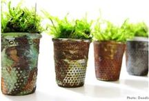 Plants Plants and Plants