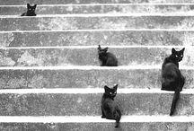 Kitties / by karenwog