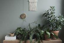 Indoors garden