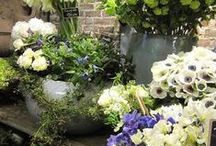 flowers / flowers - garden shop
