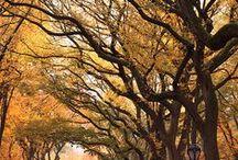 Branches / ramifications / takken / Branches in all its shapes / takken in al haar vormen
