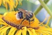 ♥♡♥Grandma's Beehives♥♡♥ / by Prayer Whisperer 2