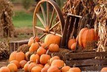 ♥♡♥Grandma's Pumpkin Patch♥♡♥ / by Prayer Whisperer 2