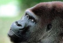 """Gorilla Go&Co / GO&CO """"The famous gorillas brand"""" Envíos a todo Colombia / WhatsApp pedidos: 304 465 55 29 E-mail: contacto@gococlothing.com www.gococlothing.com"""