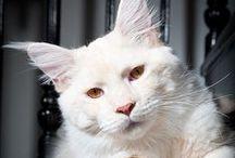 cats / by Ketty Pierro