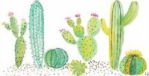 Cactus / who don't like cacti?