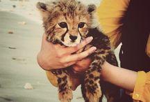 Cute Stuff :)