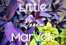 Little Green Marvels / My greens and some inspiration about