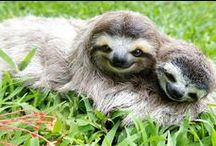 Sloths / by Kim Anderson