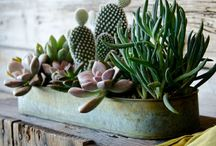 Flora / Indoor and outdoor plants I like, mostly succulents.  / by Maria Luci