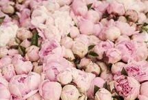 FLOWERS / flower, flowers, petal, nature, beautiful, plants, blossom, love, pretty, spring, summer, botanical, floral