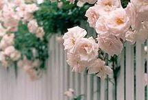GARDENS / flower, flowers, petal, nature, beautiful, plants, blossom, love, pretty, spring, summer, botanical, floral, garden, decor, outdoor