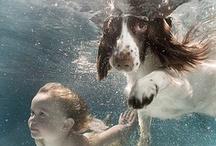 Underwater Photography / by Harry Hammond