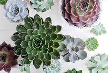 Indoor plants / The next big thing