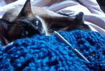 #hugor  mi #gato #cat / Les presento a mi gato Hugor...huguito para la flia