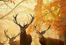 The best of Autumn / Autumn!!!