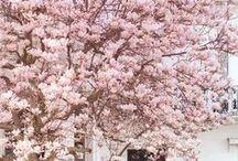 { spring . time }