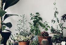 { plant . lady }