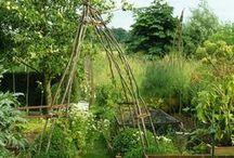 permaculture / garden ideas / plants