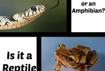 Homeschool♡Reptiles & Amphibians / by Blessed Country Family ♡