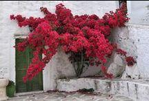 Nature of Naxos