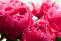 Flowers/ plants / Bouquet, flowers