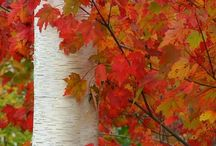 Autumn / by Charlene Cook