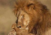 Animals love / Animaux