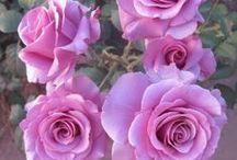 Květiny / malované květiny, příroda, zahrady, květinové dekorace