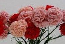 Flores, vegetales, etc, en crochet / Free patterns, patrones gratis