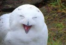 Birds/Owls