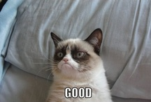 Grumpy Cat / Grumpy Cat is the best meme on the Internet; don't let anybody tell you any differently. / by Christina H.