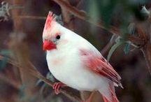 Beautiful  Birds / by Tina Reynolds
