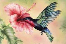 Pássaros & Aves