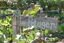 The Old Vintage Potager