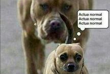 chistes !! ;)