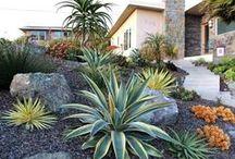 Arizona Landscaping