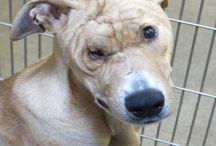 * URGENT ADOPTABLES / DEATH ROW PETS ** / These pets have little time left!!! Our goal is to help the public with finding pets and get them out of shelters and into loving homes as quickly as possible.Their lives depend on it! We ask that you take the time to pin and re-pin in hopes of giving these animals a chance.♥ EVERYONE IS WELCOMED TO INVITE PINNERS TO THIS BOARD. PLEASE SHARE!