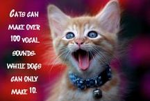 Fun Fact Friday / #FunFactFriday  / by NOVA Pets