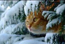 Животные всякие разные... милые и прекрасные
